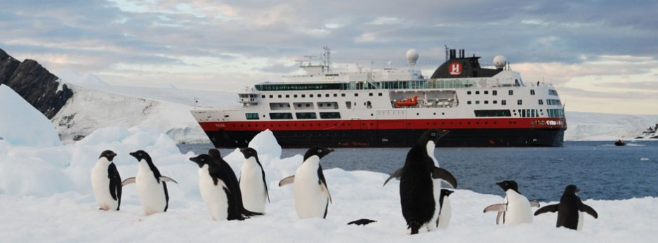 King Penguins  on an Antarctic voyage with Hurtigruten