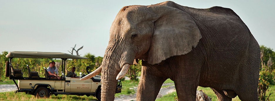 Majestic elephant - Botswana safari game drive - from Belmond Safaris