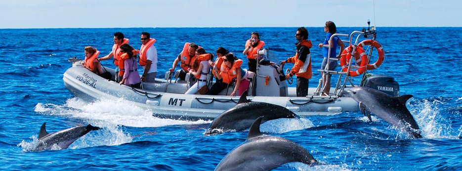 Dolphin watching, Azores