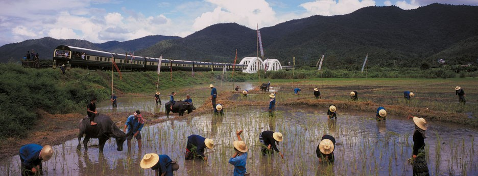 Paddy fields, Thailand, courtesy of Indus Experiences