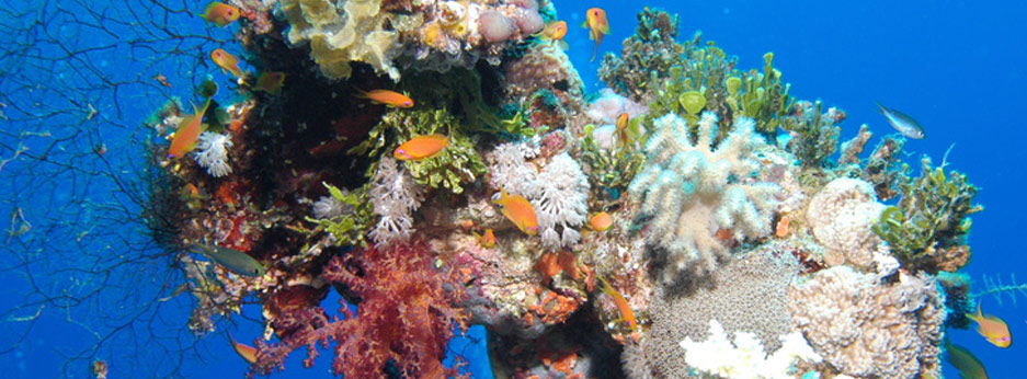 See the superb marine life, The Great Barrier Reef, Australasia